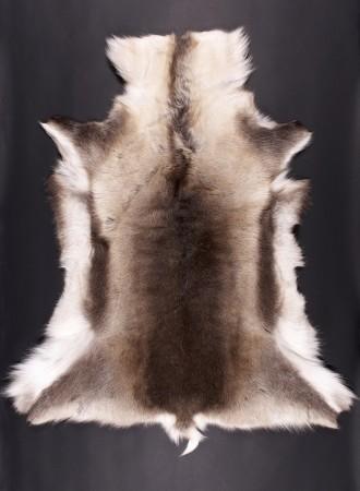 REINSDYR SKINN-renne-blanc-marron-2-310k