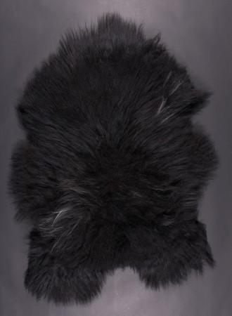 SPAELSAU-mouton-noir-2-350k