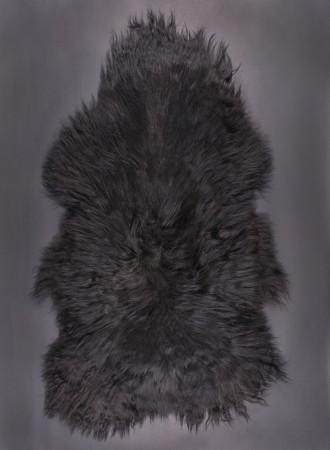 SPAELSAU-mouton-noir-350k